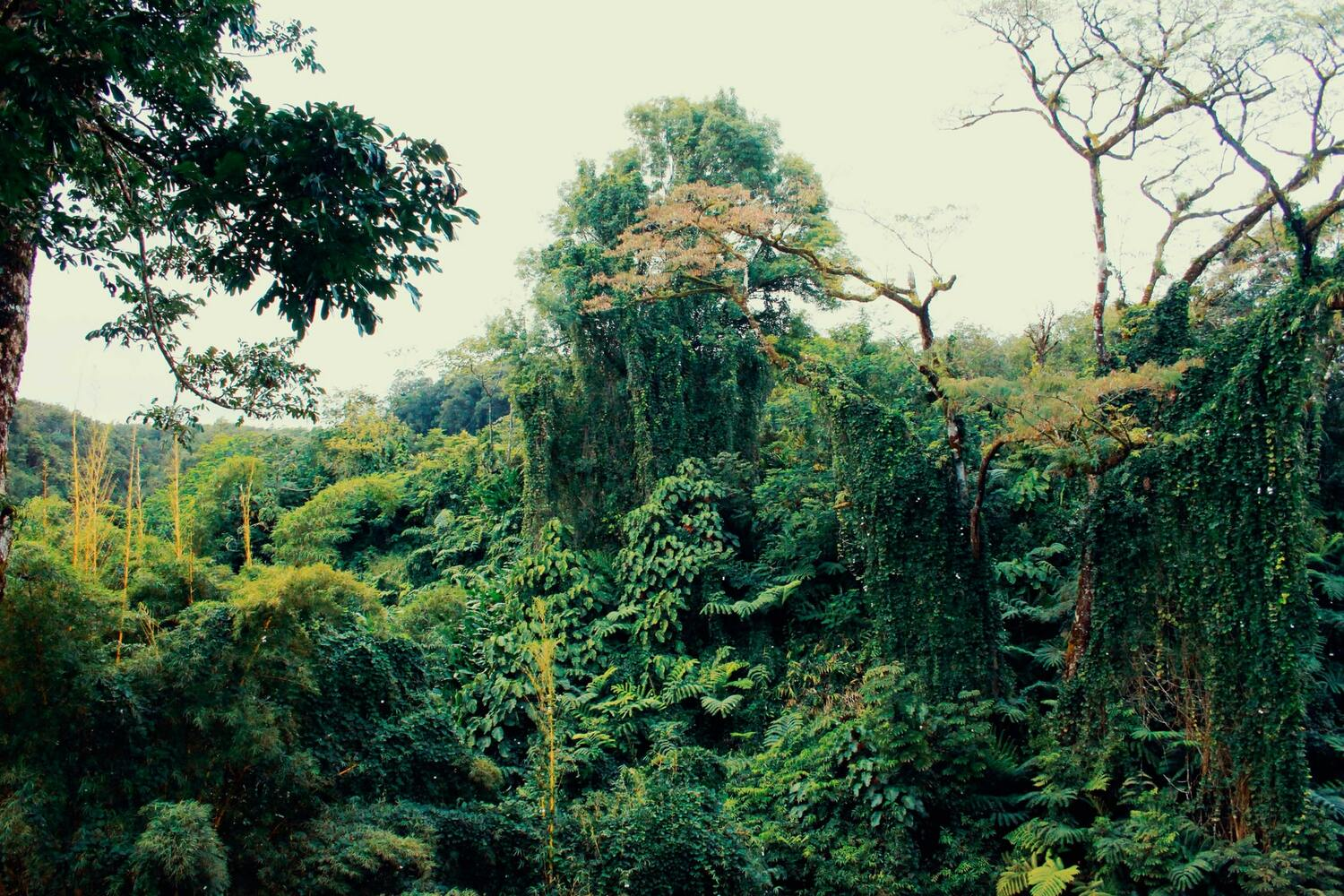 How did deforestation of the Amazon rainforest start? | Ninth Valley