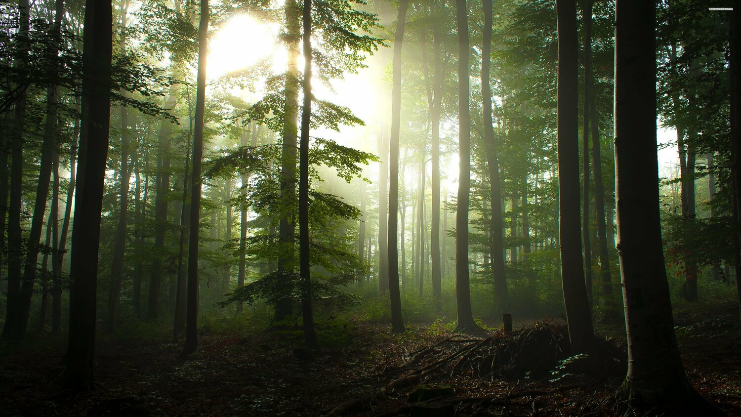 A Tree Teaches You How To Plant A Tree | Ninth Valley